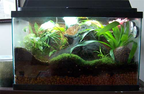 10 Gallon Vivarium | www.pixshark.com - Images Galleries ... 10 Gallon Vivarium